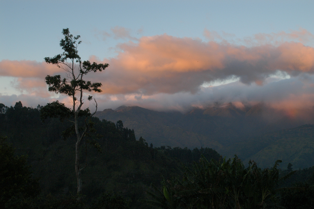 Lime Tree Farm in Jamaica's Blue Mountains