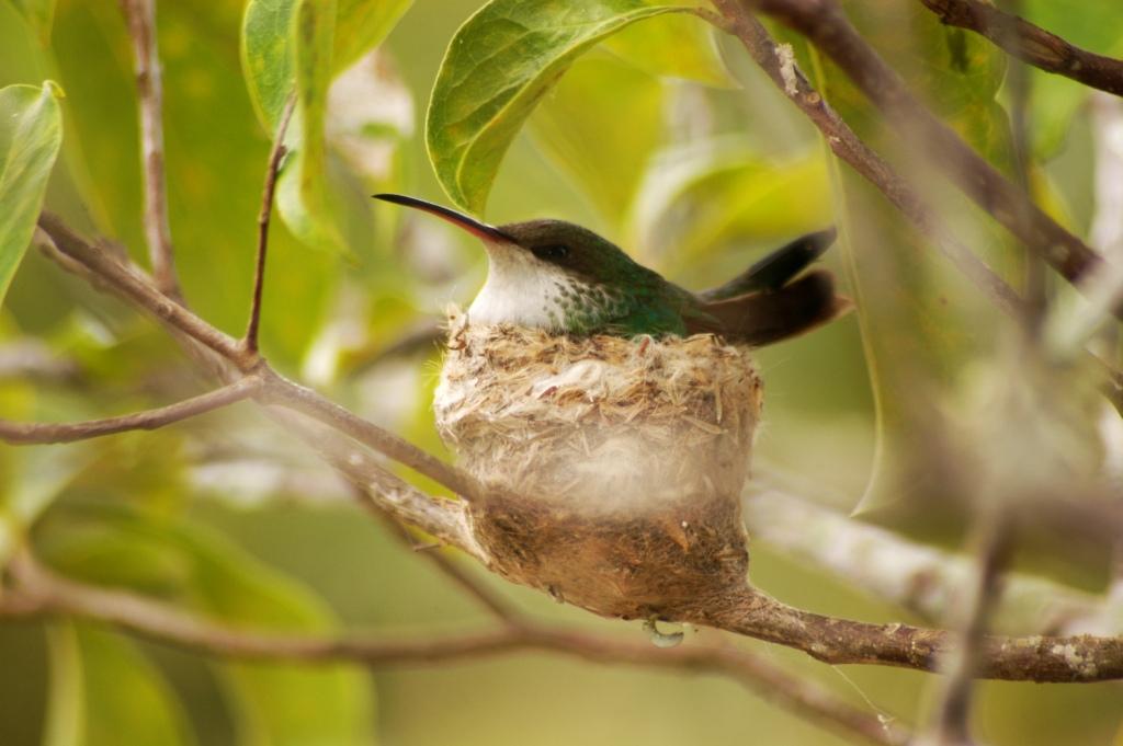 Birdwatching in Jamaica